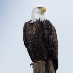 Bird Survey – Vancouver Natural History Society