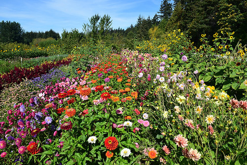 A field with multiple types of flowers at the Farm.
