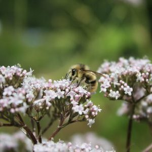Plants and Pollinators in an Era of Global Change