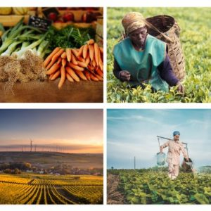 Food Roundtable: Knowledge from Agroecological Experience