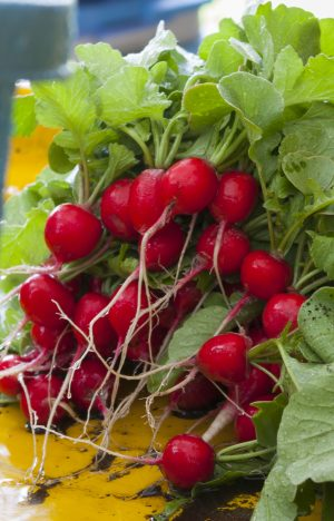 Market Recipe Blog: Roasted Radishes with Brown Butter, Lemon, and Radish Tops