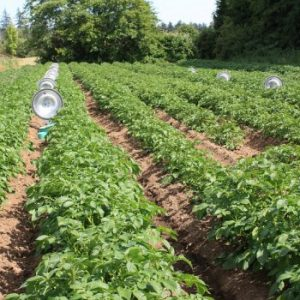 Data Helps Drive Diversified Agroecosystems Research
