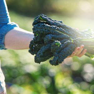 UBC Farm Seed Funding