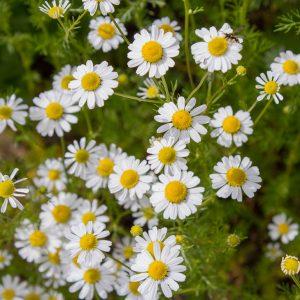 *Online* Herbal Medicine Throughout History