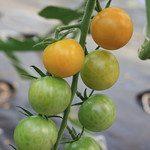 *Online* Vertical Gardening for Beginners