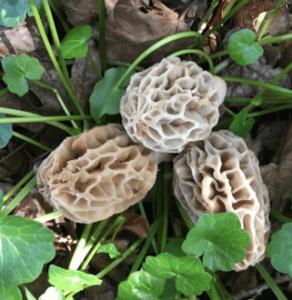 *Online* Mushroom Foraging