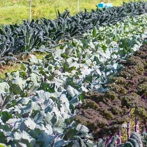 The Conversation: Protecting Biodiversity – Farmers and Agriculture