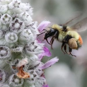 iNFO News: Wildfire smoke may affect insects ability to 'see' and 'smell' plants
