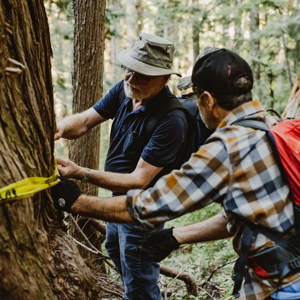 On B.C.'s Sunshine Coast, some of Canada's oldest living trees escape the chopping block